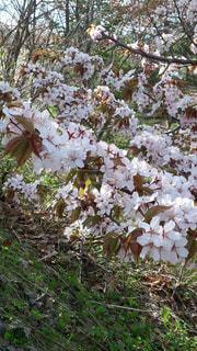 花の写真・画像素材[424069]