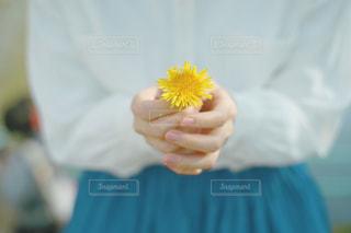 花を持つ手の写真・画像素材[3591041]