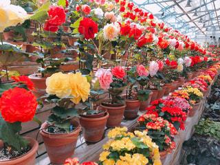 庭園に色とりどりの花のグループの写真・画像素材[1257605]