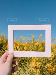 花畑,黄色,菜の花,額縁,イエロー,yellow,花ひろば