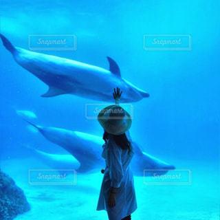 水中で泳いでいる魚の写真・画像素材[2177601]