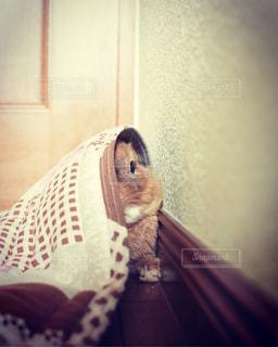 ベッドの上に座っている猫 - No.728722