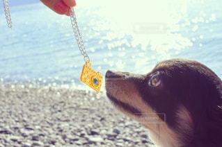 水の掛かる犬 - No.975264