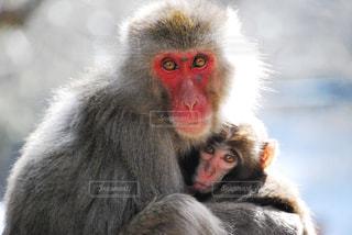 猿 - No.380362