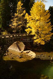 森の川に架かる橋 - No.897069