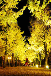 フォレスト内のツリーの写真・画像素材[1604290]
