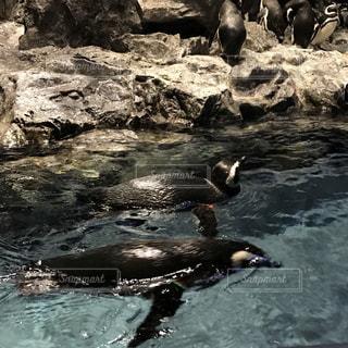 カップル,かわいい,親子,水族館,ペンギン,可愛い,兄弟,姉妹,ぺんぎん,ツーショット