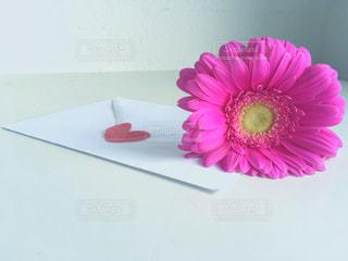ピンクの写真・画像素材[452685]