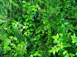 緑の写真・画像素材[455430]