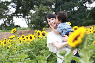 ひまわり畑にての写真・画像素材[718535]