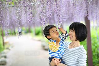 フジの花に夢中の写真・画像素材[1183136]