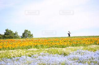 カラフルな花畑の中心での写真・画像素材[1199111]