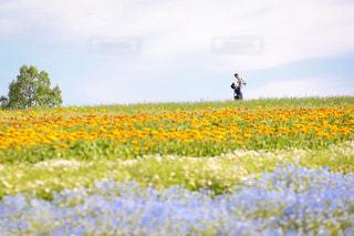 フィールドに黄色の花の男の写真・画像素材[1221039]