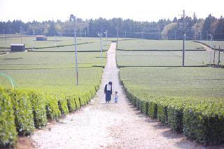 茶畑の中心での写真・画像素材[1221046]