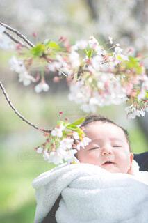 初めての桜 記念日の写真・画像素材[4274497]