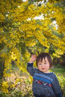 木の前に立っている少女の写真・画像素材[4340851]