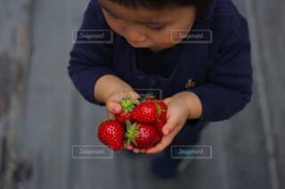 果物を切る少年の写真・画像素材[4448373]