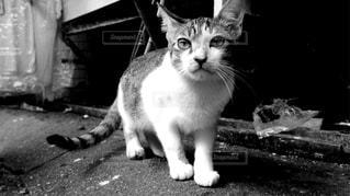 白い面の上に座って猫の写真・画像素材[813360]