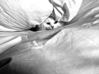 ベッドの上で横になっている猫 - No.816610