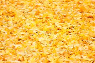 黄色の絨毯 - No.890245
