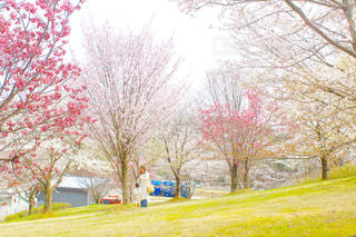 春の写真・画像素材[1122478]
