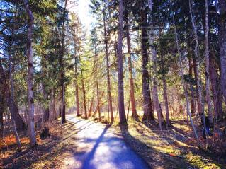 ドイツの林道にての写真・画像素材[1162651]