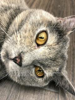 近くに猫のアップの写真・画像素材[1258056]
