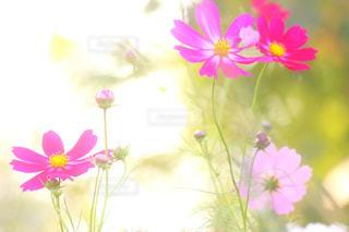 近くの花のアップの写真・画像素材[1456165]