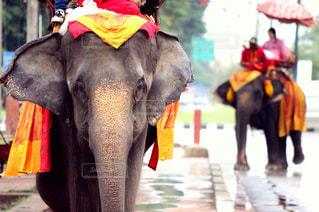 自然,風景,海外,景色,旅行,象,タイ,海外旅行,バンコク,アユタヤ,エレファント