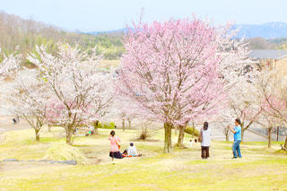 公園,花,春,桜,木,花見,サクラ,満開,お花見,イベント,草木,さくら,開花