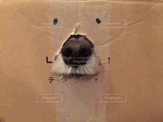 No.301947 犬
