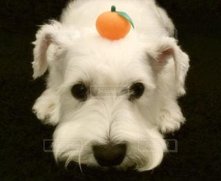犬の写真・画像素材[302172]