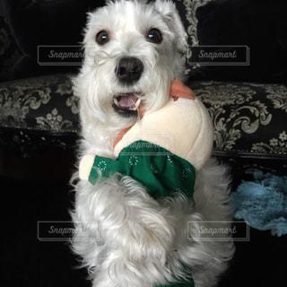 犬の写真・画像素材[315878]