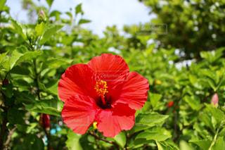 近くの花のアップの写真・画像素材[898761]