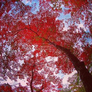 自然の写真・画像素材[253709]