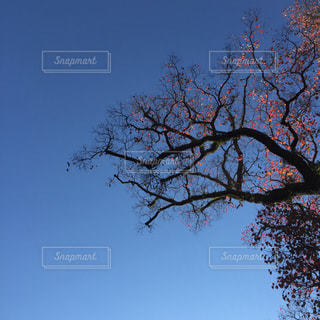 自然の写真・画像素材[254005]