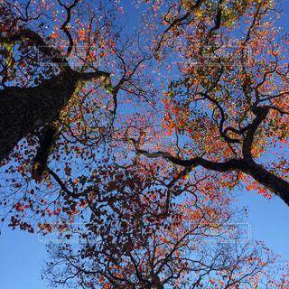 自然の写真・画像素材[254012]