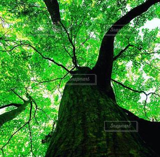 自然の写真・画像素材[254068]