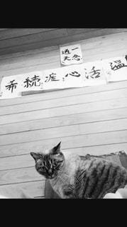 猫、それぞれの心の写真・画像素材[814343]