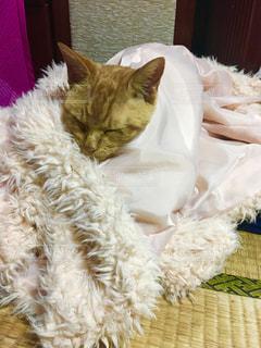 猫,冬,ねこ,可愛い,茶トラ,奇跡,寒さ対策,暖をとる,袖から顔を出す