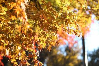 近くの木のアップの写真・画像素材[850246]