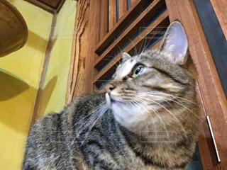 木製の椅子の上に座っている猫の写真・画像素材[1281635]