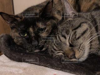 ベッドの上で横になっている猫の写真・画像素材[1281636]