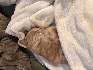 ベッドの上で横になっている猫の写真・画像素材[1281637]