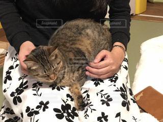 ベッドの上で横になっている猫の写真・画像素材[1281639]