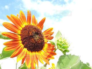 花の写真・画像素材[598943]