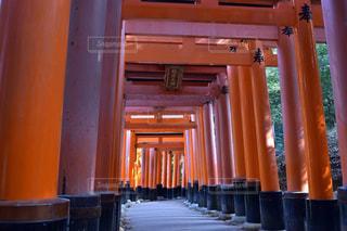京都,赤,鳥居,観光,伏見稲荷大社,千本,稲荷山神社