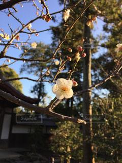 花の写真・画像素材[309792]