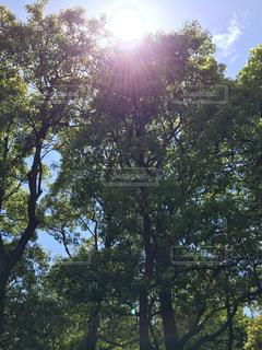 木の写真・画像素材[472656]