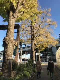 建物の前にツリーの写真・画像素材[880300]